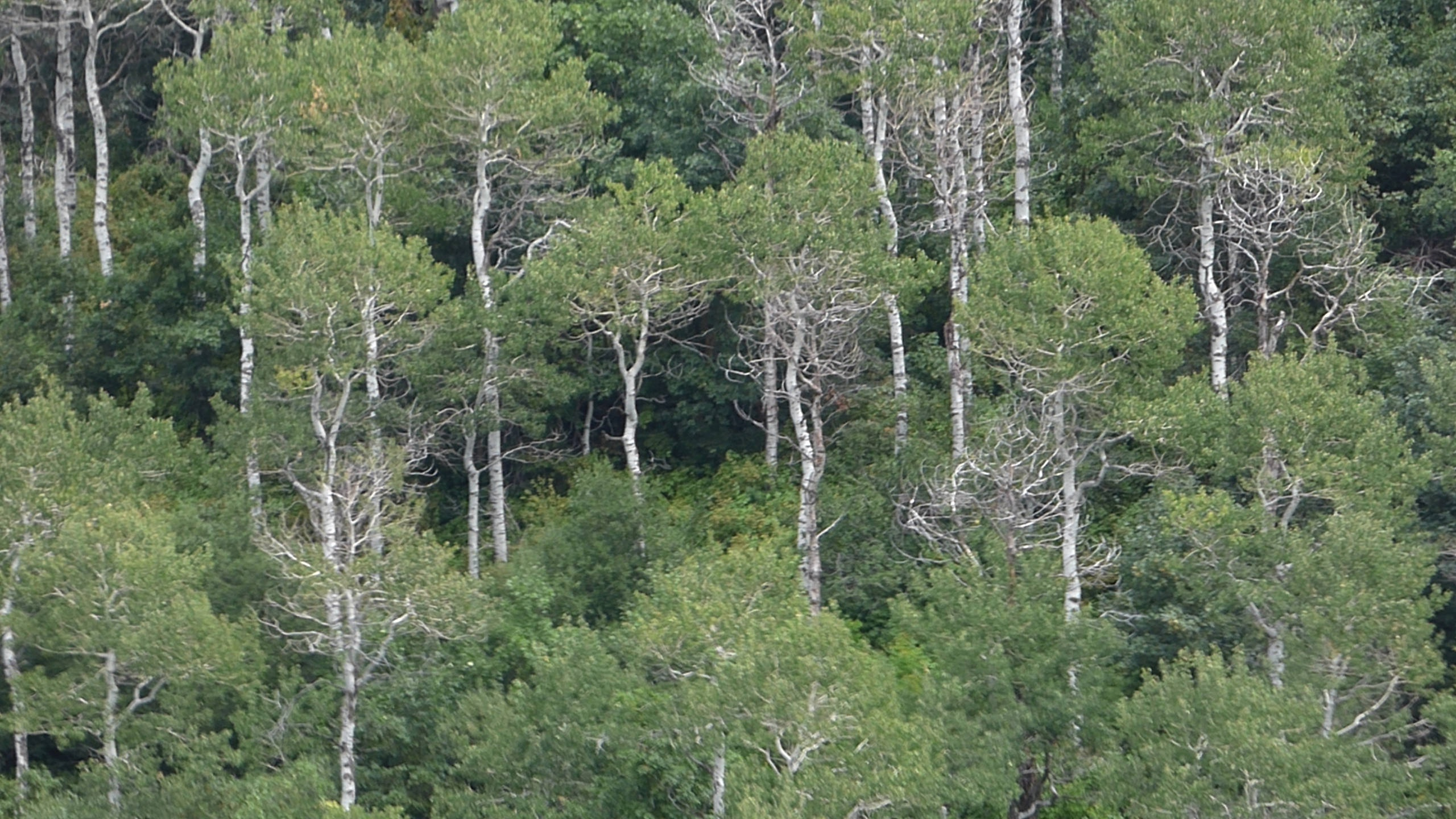 Why do we say 'One can't see the wood for the trees' when it ...