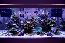 What is the difference between 'aquarium' and 'oceanarium ...