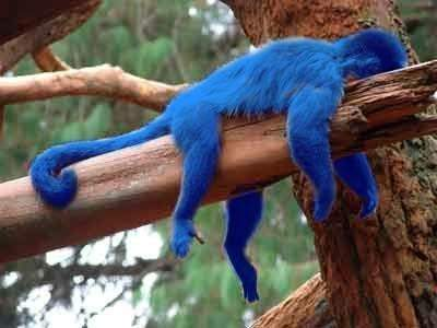 Image result for blue monkey