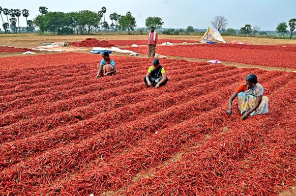 Image result for mirchi export