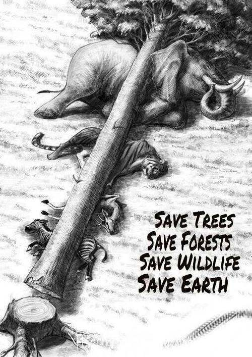 why we plant trees Here, i am not going to discuss and share that trees give us shade, fruits, shelter to birds and animals, stop soil erosion etc, we all know these benefits.