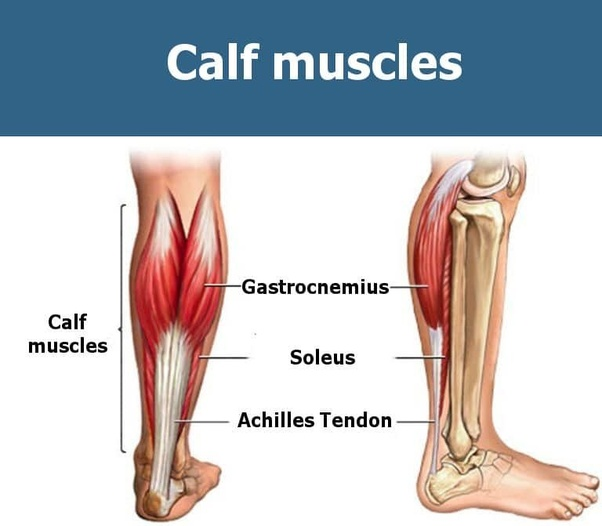 How To Work Out My Calf Muscles Quora