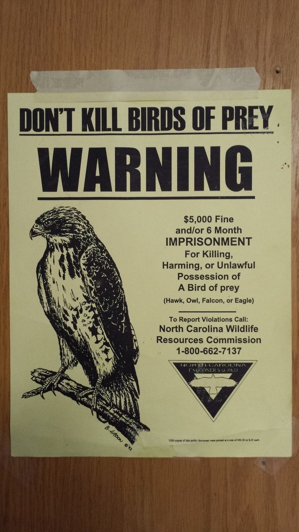 Are All Hawk Feathers Illegal To Have Or Just From Red Tailed Hawks