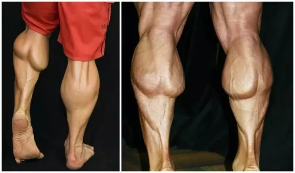 Image result for calf muscles