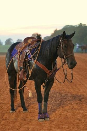 What equipment do you need to ride a horse? - Quora