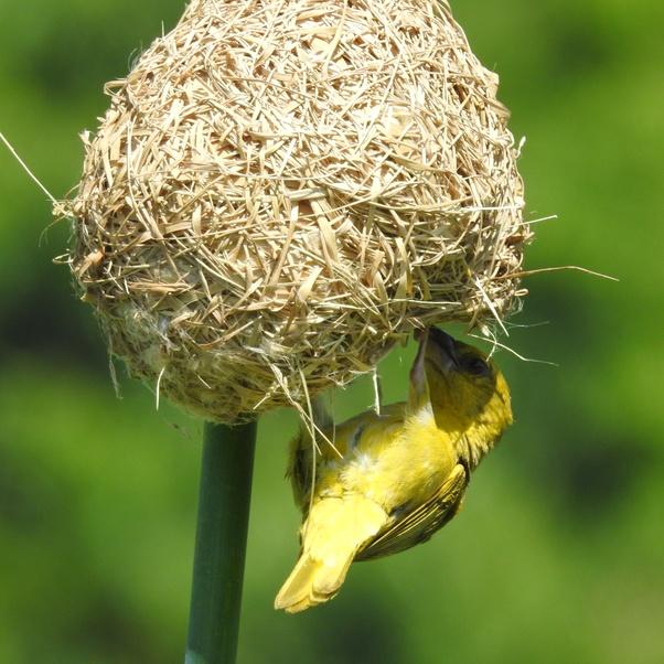 How Do Birds Protect Their Egg Quora