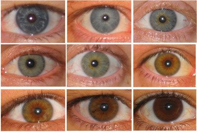 what s the distribution of eye colors in the world quora