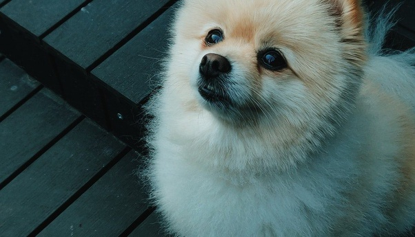 Which Is The Best And Cheapest Dog To Buy In India Quora