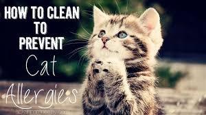 ¿Cuál es la mejor manera de tratar las alergias a los gatos?