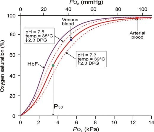 What Is The Reversible Binding Reaction Of Hemoglobin To