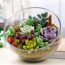Where Can I Get Terrarium Plants In Chennai Quora