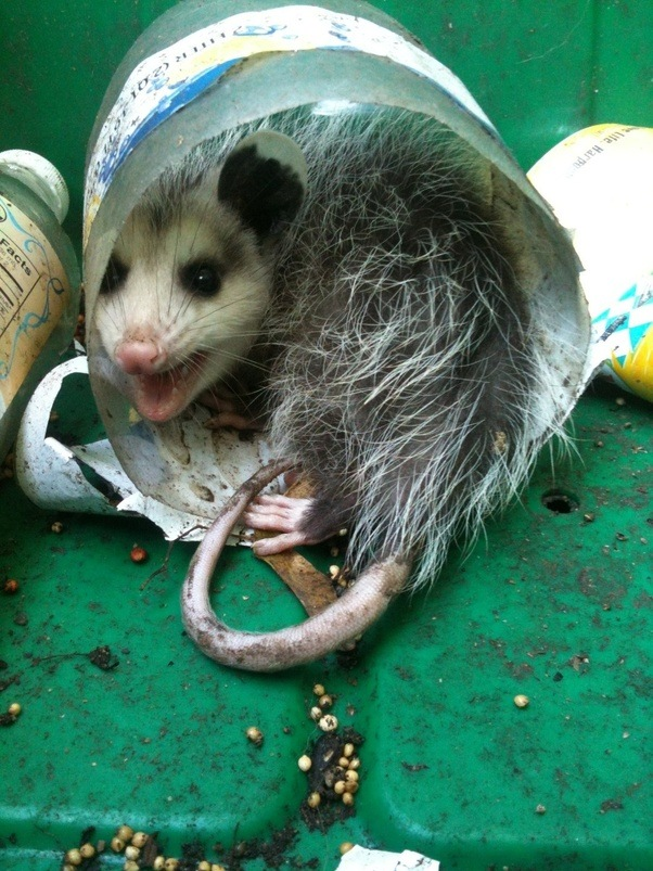 How to keep possums out of your garden quora - How do you keep squirrels out of your garden ...
