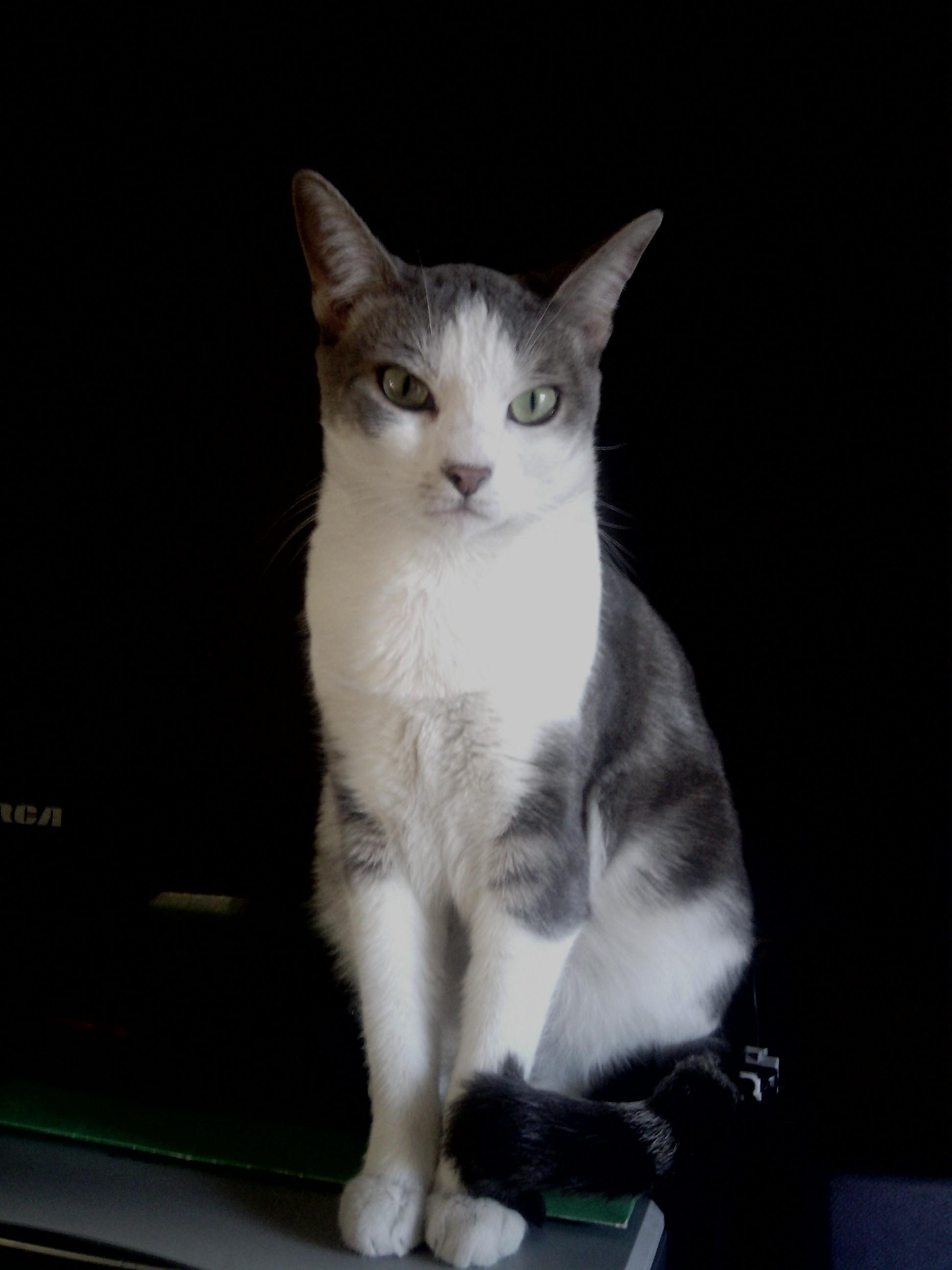 Carolina: Craigslist Kittens For Sale