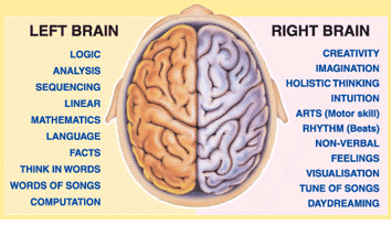 Is it true saying that left portion of brain works much faster than the human brain is made up of two halves these halves are commonly called the right brain and left brain but should more correctly be termed hemispheres ccuart Images