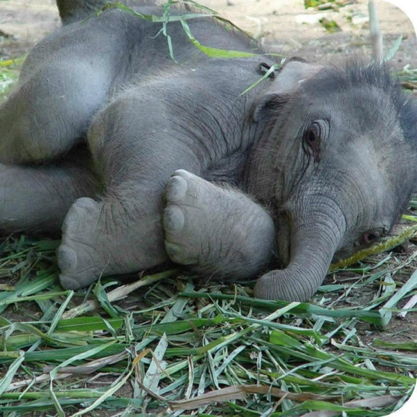 What Do Baby African Elephants Look Like - Quora-9457