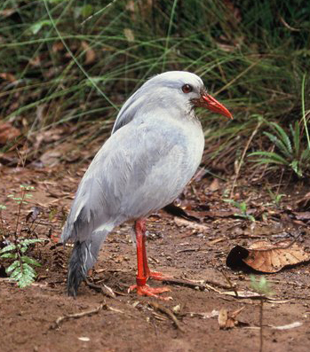 what are some bird names that are 4 letters long quora