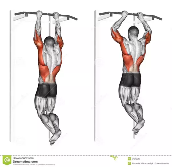 Why are pull ups much more difficult than push ups how for Plank muscles worked diagram