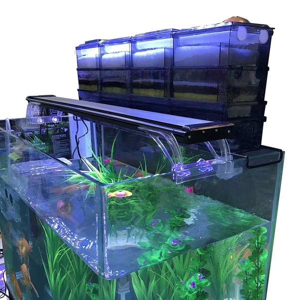 what would i need to do to keep my aquarium water crystal clear quora