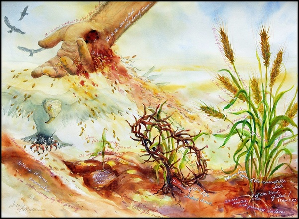 """Bible Study: Does """"seed"""" mean the word of God? - Quora"""