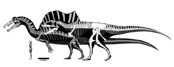 Who would win, Giganotosaurus or Spinosaurus, and why? - QuoraGiganotosaurus Vs Spinosaurus