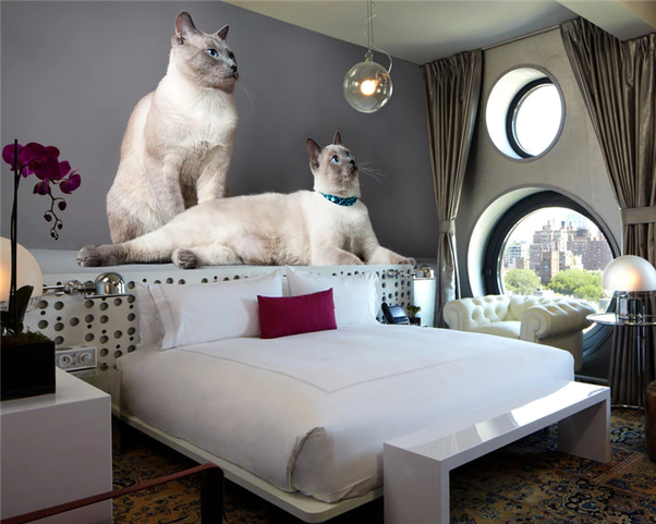 Can I stick wallpaper of a kitty in my bedroom? - Quora