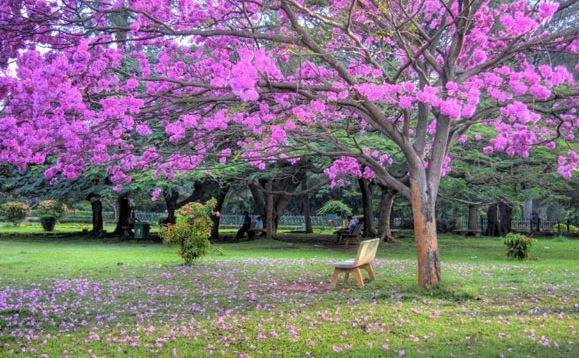 Which Is The Most Beautiful Place In Bangalore Quora