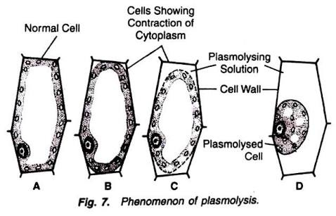 What Will Happen When A Plant Cell Is Kept In Hypotonic Solution