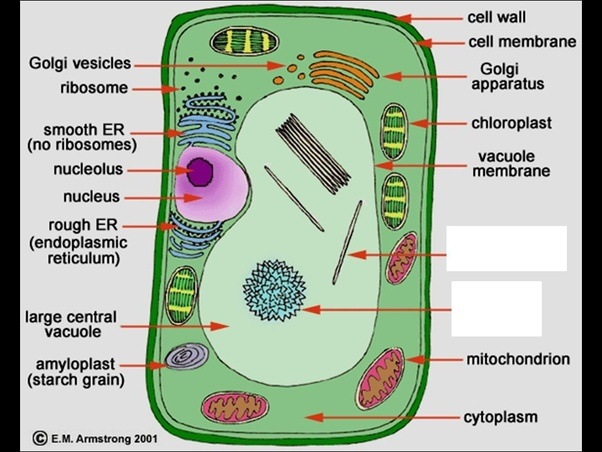 What Are Organelles Found In Plant Cells