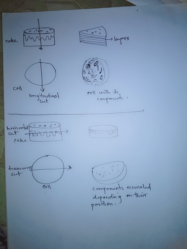 How Can We See The Cell Organelles And Nucleus Present Inside The