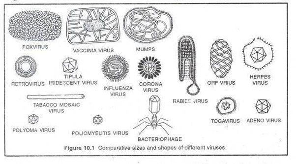 what are the different shapes of viruses