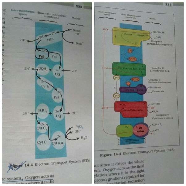 What are the changes made in the NCERT biology class 11 ...
