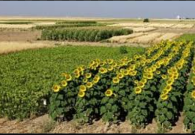 What Is Dryland Farming Can You Outline Its Significance
