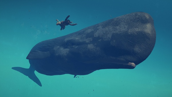 The size of whales compared with humans in a whale watching  |Blue Whales Compared To Humans