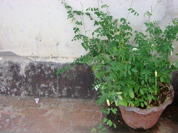 Balcony Garden Vegetable Tomatoes