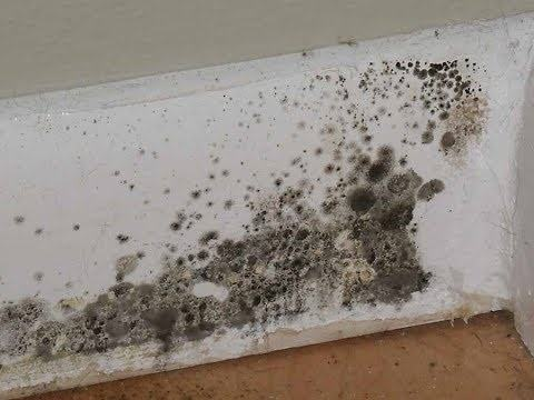 If You Find Black Spots On Wood Insulation Or Around Windows May Have Uncontrolled Mold Growth In Your Home This Case Only Proper Removal