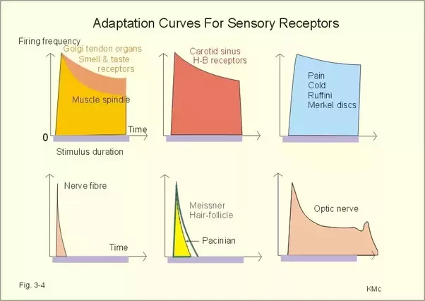 What Is The Purpose Of Sensory Adaptation In Psychology Quora