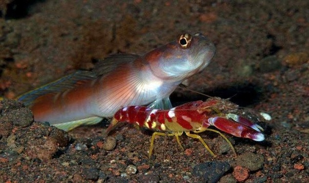 What Are Some Intriguing Examples Of Symbiotic Relationships Between