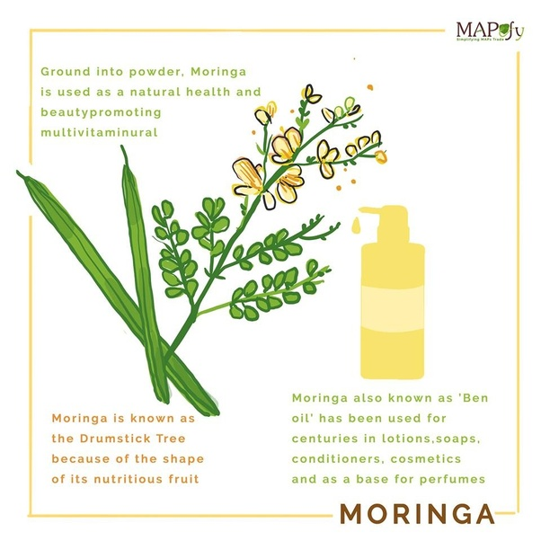 Do moringa leaves have benefits without any side effects