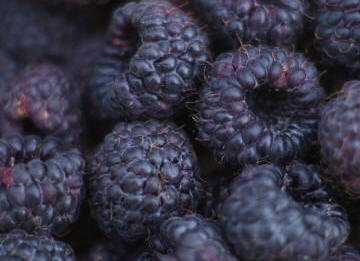 Pictures Of Blue Raspberries