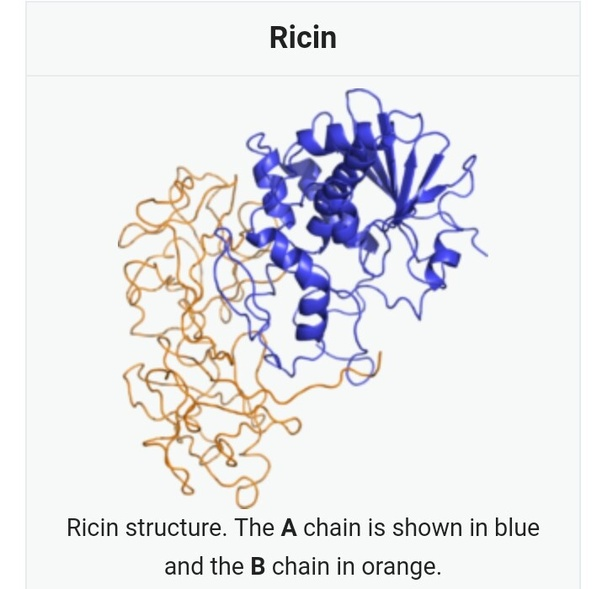 What Is The Structural Formula Of Ricin Quora