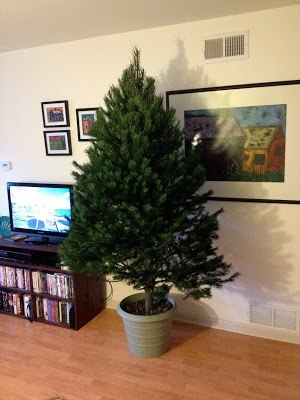 sturdy diy christmas tree stand - Cheap Christmas Trees Near Me