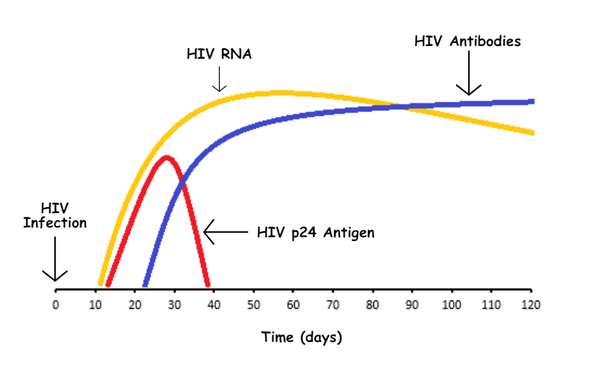 Is the p24 antigen hiv test useful for late seroconversion - Antigene p24 periodo finestra ...