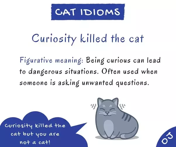 What Is The Meaning Of The Idiom Curiosity Killed The Cat Quora