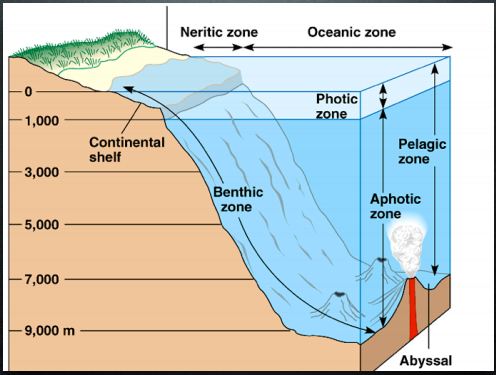 What are the differences between benthic and pelagic zones ...