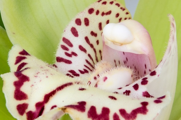 What Is Your Favorite Type Of Orchid