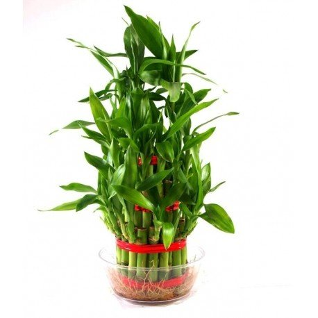 Please Check Some Best Collection Of Plants We Could Delivery It To Your Door Steps
