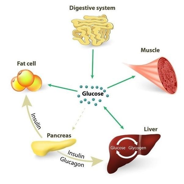 Does fat burner have side effects image 5