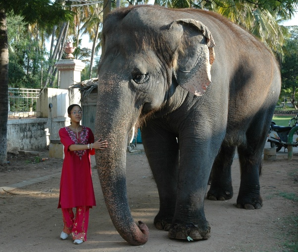 What is the tallest animal? - Quora