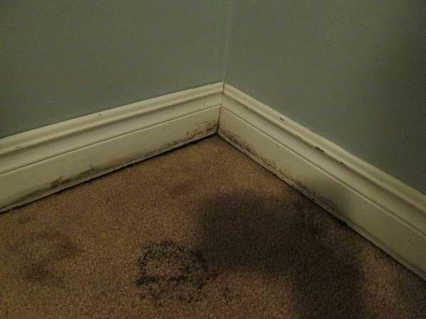 My Carpet Got Soaked With Water How Do I Get Rid Of The
