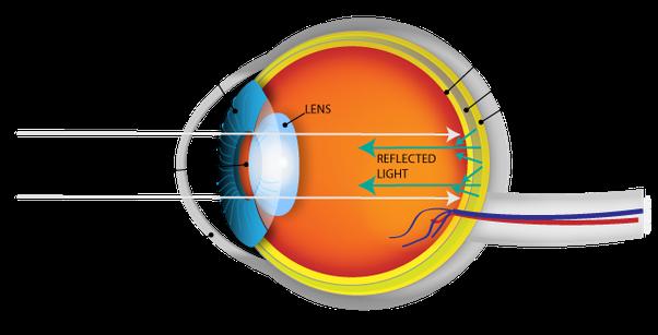 tiger eyes diagram eyes diagram rods cines #2